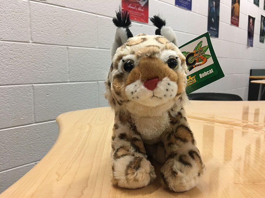 Share-A-Cat: Please donate outside the cafeteria the 17-19