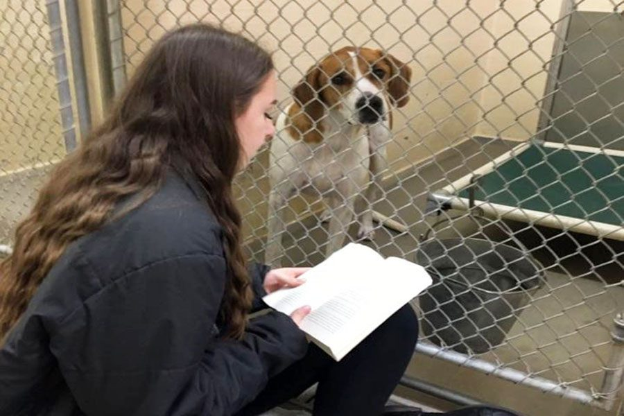 Senior Kelly Cooke, Co-President of the BHS Humane Society, reads to Jack, a four-year-old hound mix who was at Fauquier SPCA last year.