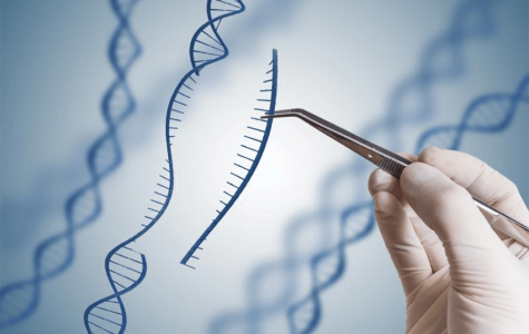 A scientist modifying a piece of DNA. Photo courtesy of the Genetic Literacy Project via Creative Commons.